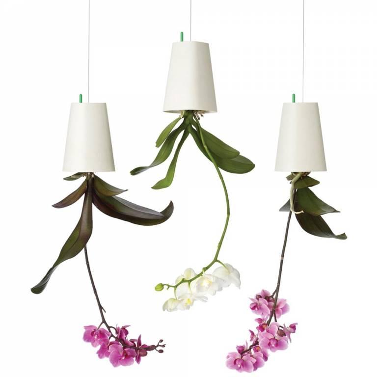 Orhidee (1)