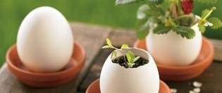 ghivece pentru plante
