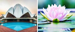 10 clădiri incredibile inspirate de natură (9)