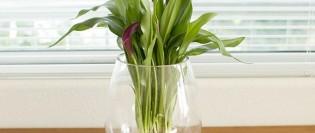 cum sa cresti o planta intr-o vaza
